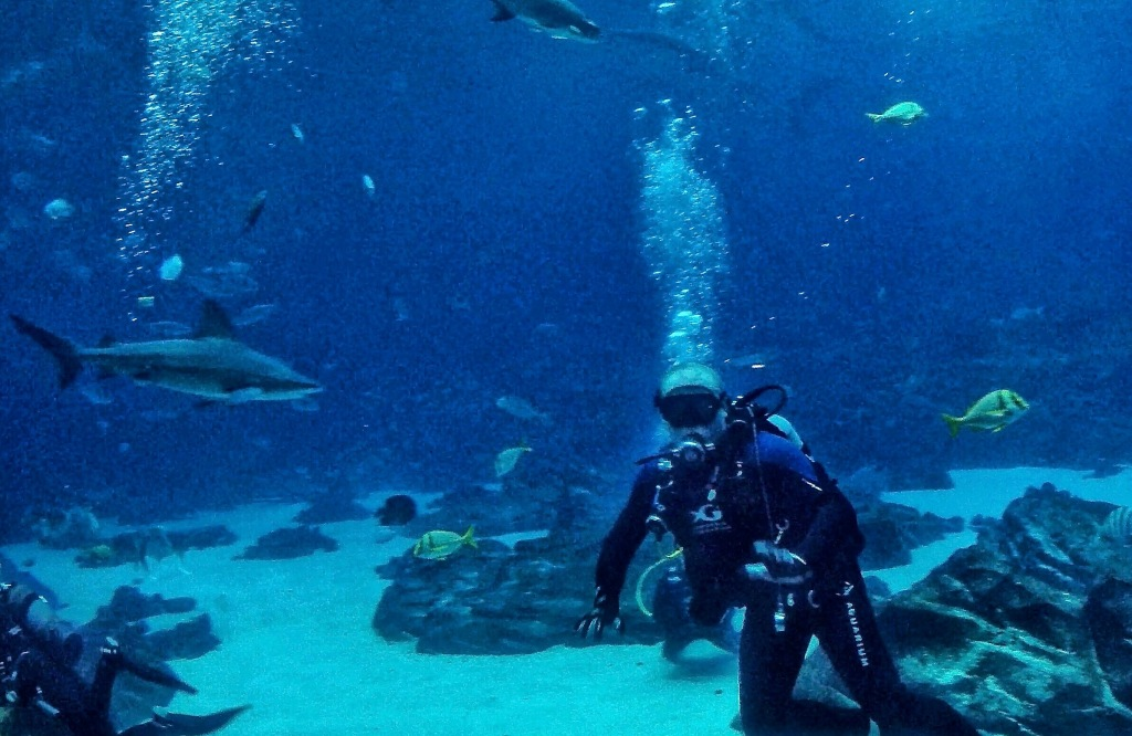 Diving With Sharks In Downtown Atlanta Planes Trains And Rvs